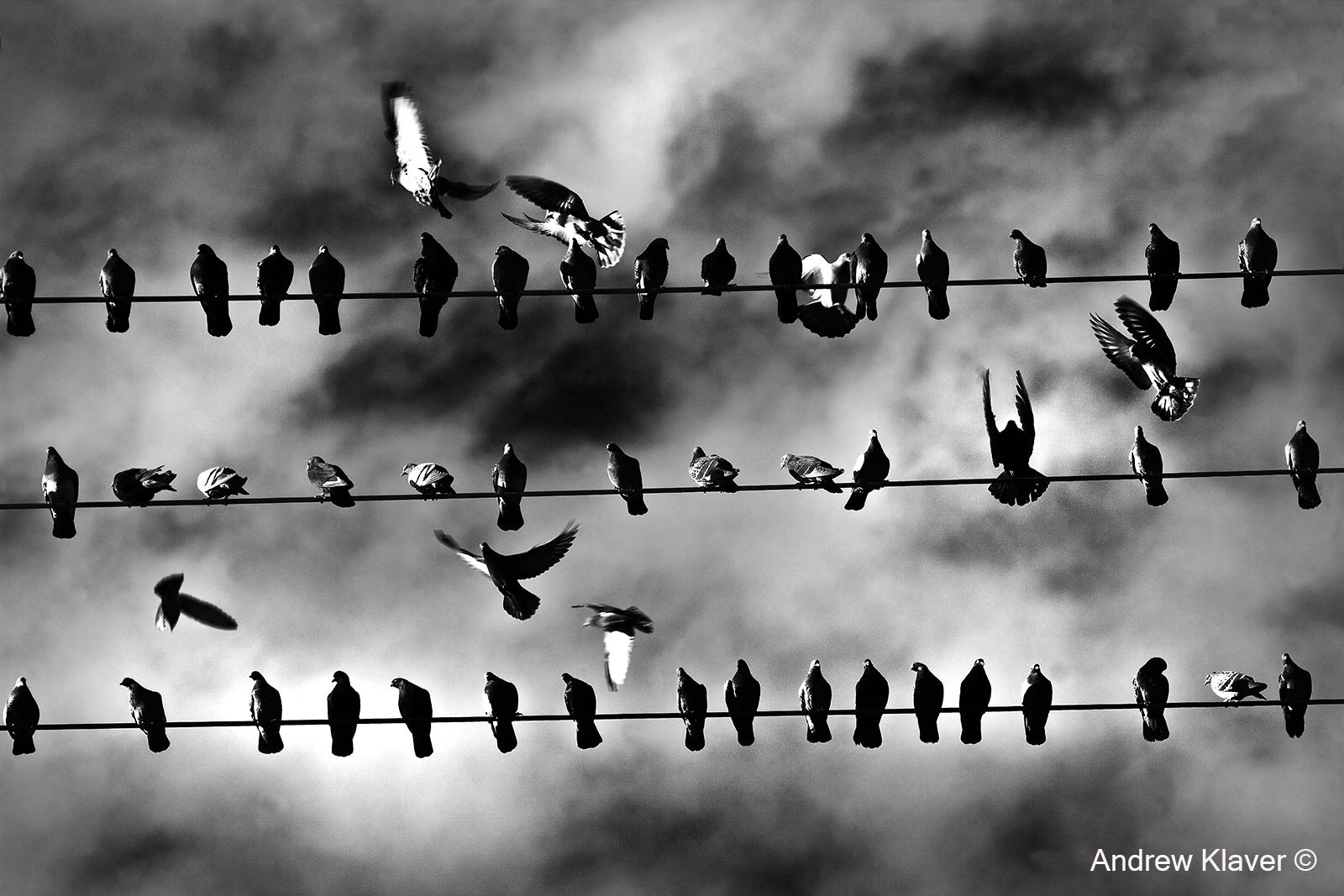 Grain elevator pigeons